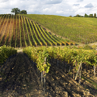 Azienda Agricola Il Ciliegio - Azienza Vinicola a MONTERIGGIONI